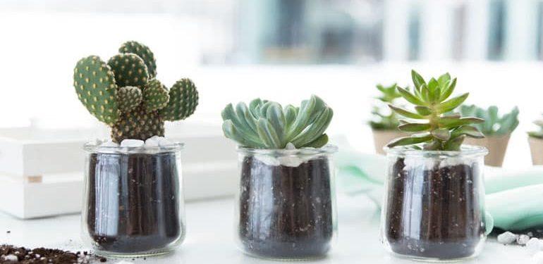 Oui-by-Yoplait-Crafts-Succulents-770x514-4